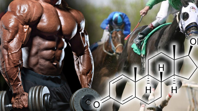 Болденоне: стероид скаковых лошадей для использования человеком?